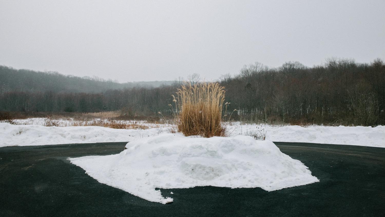 bush covered in snow in central park