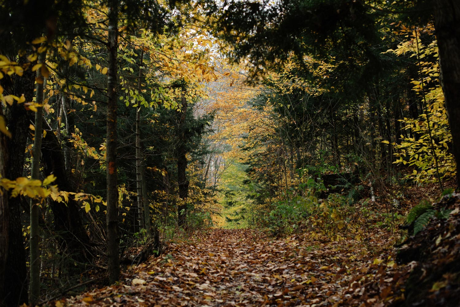 fall foliage in vermont forest