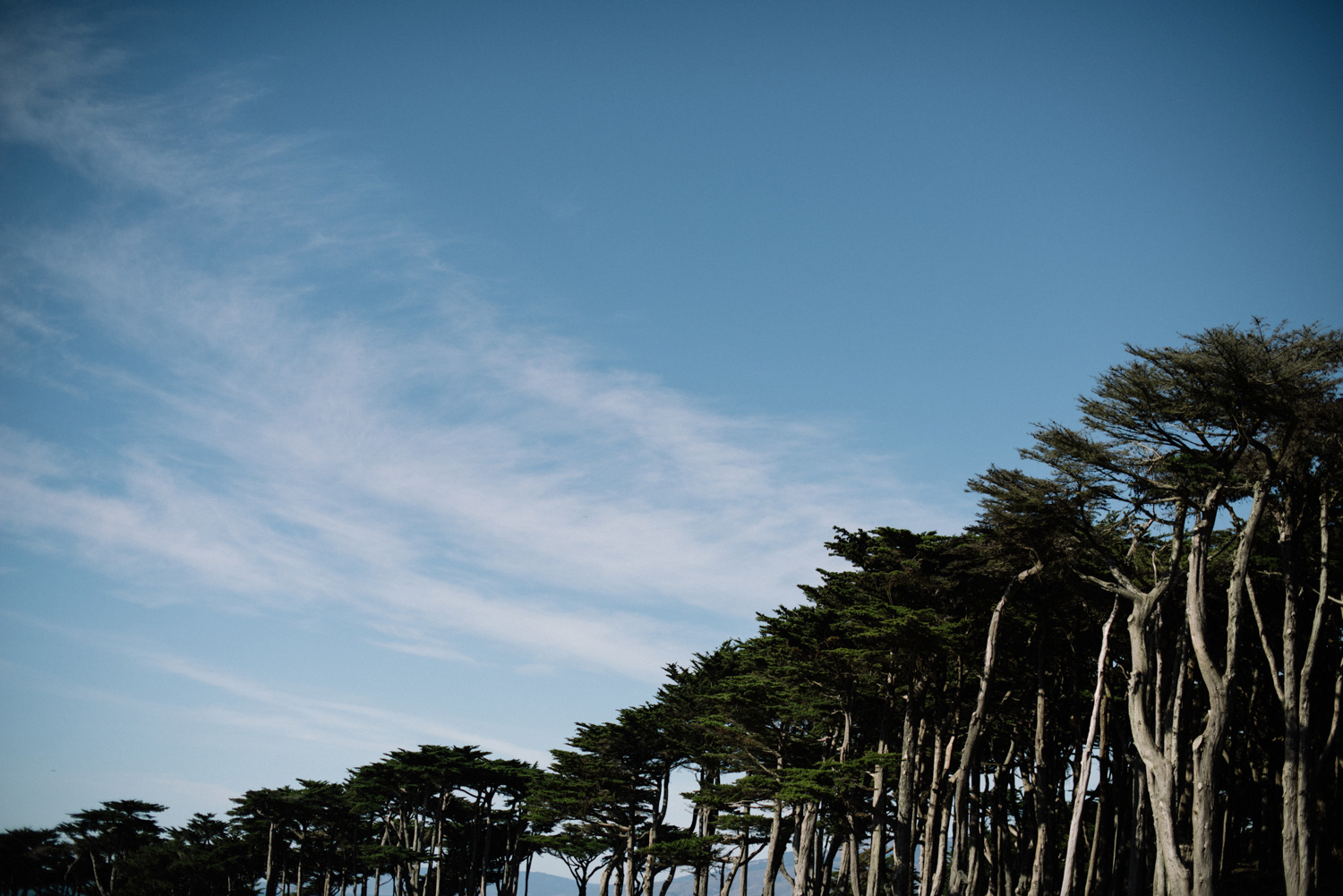 tree line in san fransisco